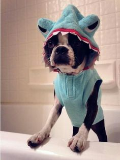 """I's not really a shark. Mom's off her meds again...."""