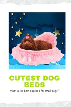 Buying your dog a comfortable dog bed doesn't mean you have to sacrifice the aesthetic of your home. Here are our 8 top picks for cute dog beds. Cute Dog Beds, Dog Beds For Small Dogs, Cute Dogs, Dog Breeds Chart, Loyal Dog Breeds, Dog Names Unique, Unique Dog Breeds, Dog Training Tools, Training Schedule