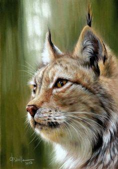 Lynx. Pastel on velour paper / Christina Schulte