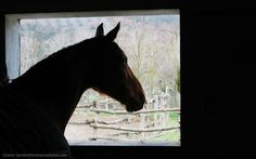 Research out of the United Kingdom suggests that moving horses from pasture to stable could increase colic risk.