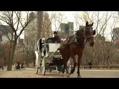 Save NYC Horse Carriages Film - Narrated by Liam Neeson - YouTube The love for horses and the TCKs views on them in America.
