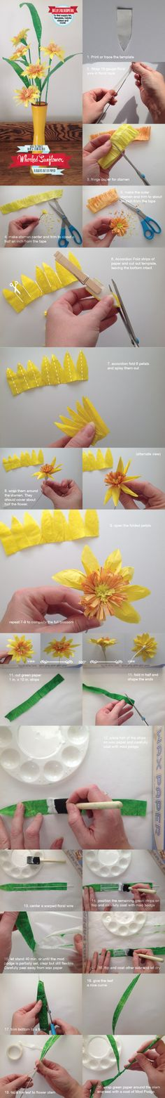 whorled sunflower how to