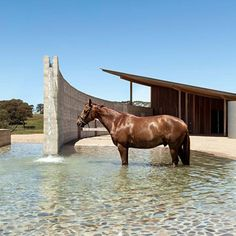 Australian equestrian centre has a curving rammed-earth wall A curving wall incorporates a stream of water around the edge of this horse riding centre, by Seth Stein Architects and Watson Architecture + Design. Dream Stables, Dream Barn, Horse Stables, Horse Barns, Horse Barn Designs, Horse Barn Plans, Rammed Earth Wall, Horse Property, Horse Ranch