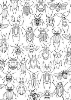 """iColor """"Fancy Bugs"""""""