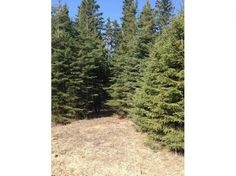 Beautifully treed acreage, with a tremendous building site and lots of privacy. Paved roads to subdivision. Four lane highway to Edmonton. Minutes walk to the Village of Wabamun, with amenities. Recreation hot spot.GST may be applicable.