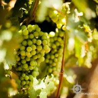 Mendoza, Argentina Mendoza, Wineries, Places Ive Been, Around The Worlds, Travel, Argentina, Wine Cellars, Viajes, Trips