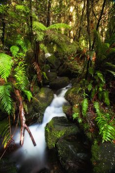 Random beauty in the New Zealand forest.