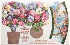 The Window Garden OILETTE, PRINTED IN ENGLAND,  Novelty cut out  Sweet Peas with decorative pot
