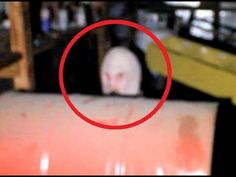 Real Grey Alien Caught On Tape 2015