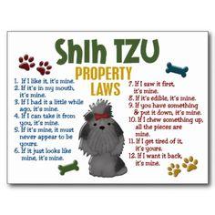 Shih Tzu Property Laws 4 Postcards from Zazzle.com