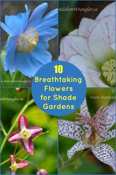 10 Beautiful Flowers that are perfect for shade gardens. #Shadegarden