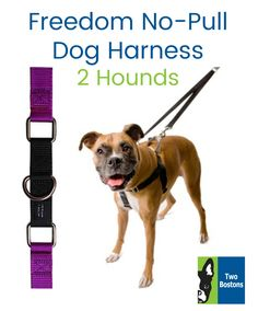 29 Dog Collars Leashes Ideas Dog Collars Leashes Collar And Leash Pet Boutique