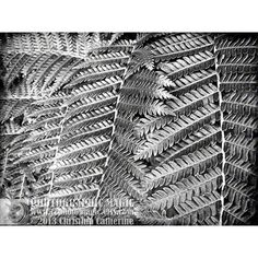 SILVER FERN digital download high resolution file fine art photography... ($11) ❤ liked on Polyvore featuring home and home decor
