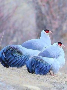 what a beautiful birds. Cute Birds, Pretty Birds, Beautiful Birds, Animals Beautiful, Cute Animals, Birds 2, Angry Birds, Funny Birds, Small Birds