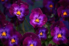 Risultati immagini per purple  flowers