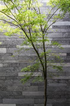Tree against the lavastone finish on upper level planter bed at Canterbury Road Residence in Toorak by B.E Architecture