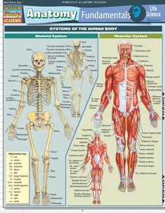 Anatomy Fundamentals: Life  Science Laminated Study Guide (9781423209829)
