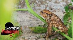 Olympus E M10 wildlife shots photography samples