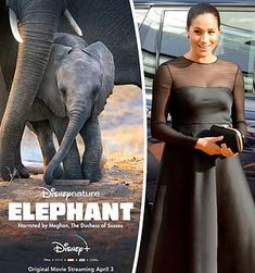 Meghan Markle's Disney debut gets a drubbing from critics Harry And Meghan News, Prince Harry And Meghan, Prince And Princess, Disney Elephant, Who Is Next, Victoria Falls, English Royalty, Windsor Castle, British Monarchy