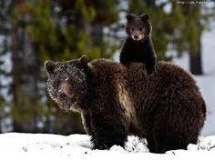 """Képtalálat a következőre: """"vicces Medve képek"""""""