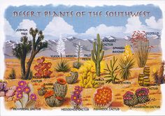 CALIFORNIA Desert Plants and Trees | photo