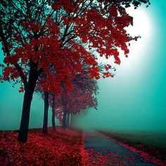 """chasingrainbowsforever: """" Colors ~ Teal and Red """" ♥"""