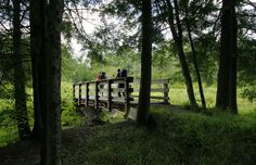 The Allegheny National Forest, Pennsylvania's only national forest, is approximately 517,000 acres and offers a rich variety of outdoor activities including camping at more than 600 campsites, boating, canoeing, hiking, biking, and ATV trails. Get outside during #SpringPA with a trip to this beautiful forest.