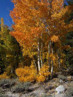 Aspen at Rock Creek