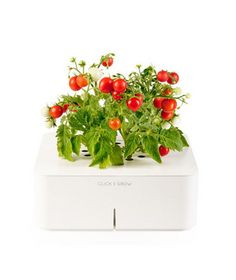 Click and Grow Plants
