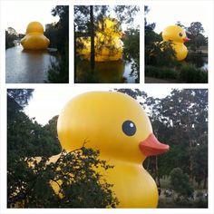 Love the ducky