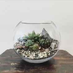 Desert World Terrarium, small - Bioattic, $59