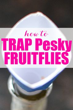 Ever had a fruit fly invasion? Here's the easy way to Trap Fruit flies.