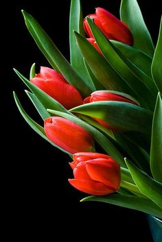 chasingrainbowsforever:  judithdcollins:  Tulips by LauriePix1 on Flickr  Black in Back