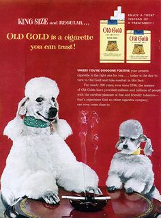 oh no, even the puppies are smoking!  too funny!