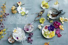 orchid feature in martha stewart weddings