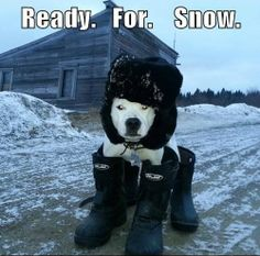 Ready.For.Snow.  #dogs #winter #adorable