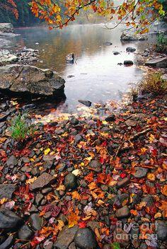 Williams River Monongahela National Forest Photograph