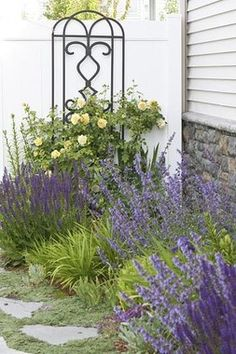 Best Foundation Plantings | Landscaping Plants Pictures | HouseLogic