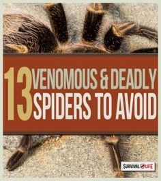 Survival Skills - Guide to Venomous Spiders | Bugging Out Tips & Ideas On How To Identify Dangerous Creatures by Survival Life http://survivallife.com/2015/04/06/guide-to-venomous-spiders/