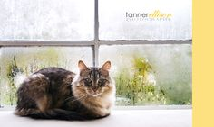 tannerellison.com Pet Photography