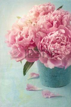 Pioen bloemen in een vaas Stockfoto