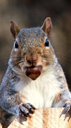 An acorn in the mouth is worth two in the ground.