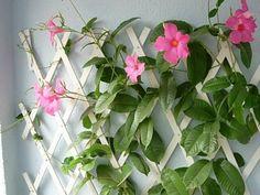 Fotos de jardines y plantas de sombra - Página 5 - INFOJARDIN