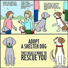 http://www.pinterest.com/petsforpatriots/adopt-dont-shop/