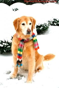 Keeping warm with a scarf.