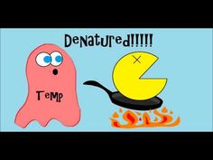 Studying enzymes making you feel queasy? The Amoeba Sisters are here to explain them to you! Come explore science with a little humor and some real world examples.