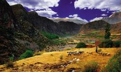 The Colca Valley in Peru is a good a places as any to hike independently as long as you stay safe (dreamstime)