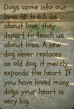 Dog Quotes, Animal Quotes, Dog Poems, Dog Sayings, Rocky Quotes, Clever Sayings, True Quotes, Yorkies, Chihuahuas