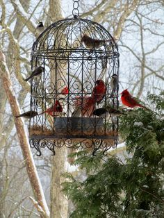 """Love our beautiful cardinals! What a beautiful bird feeding station! No wire small enough to """"cage"""" them but still intricate."""