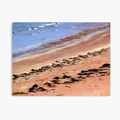 """Tideline"" Photographic Print by jenniferjwatson Create Image, Absolutely Stunning, Art Boards, Print Design, Photographs, It Is Finished, Texture, Metal, Prints"